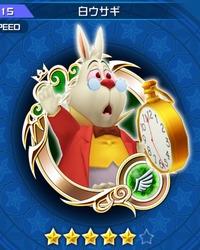 115_white_rabbit